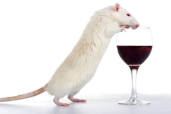 mouse wine